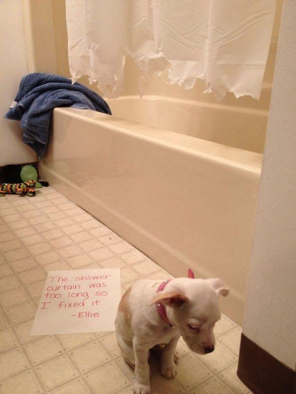 Guilt Trip Puppy